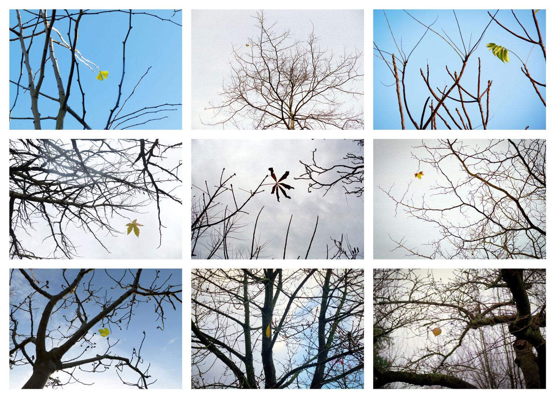 web-beeldraam-6a-laatsteblad-wit-small